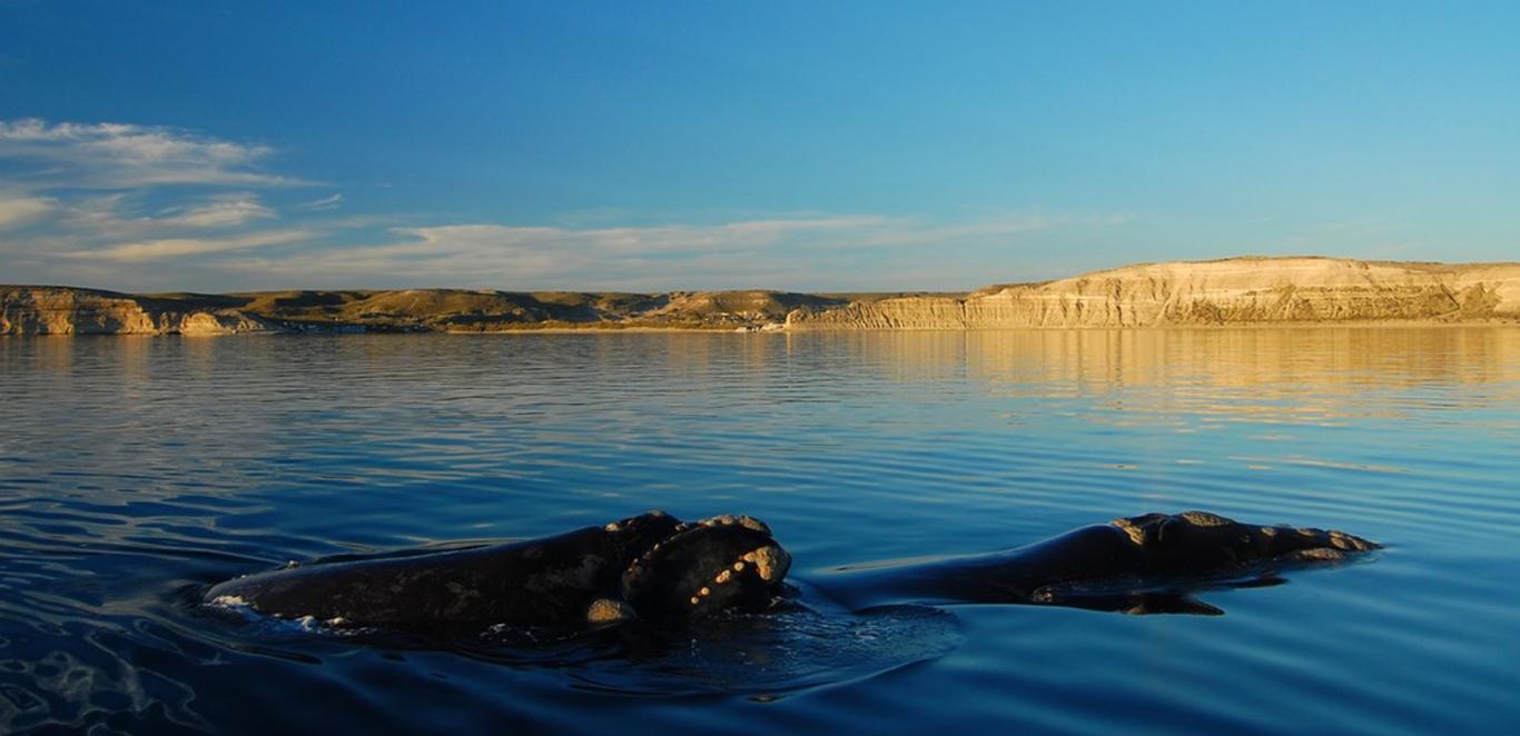 Ballenas - Peninsula de Valdes - Chubut