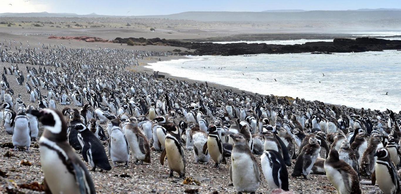 Punta Tombo - Trelew - Chubut