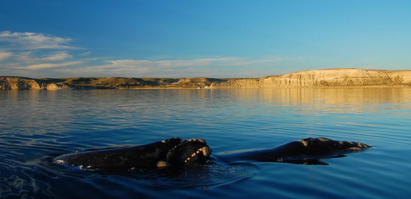 Ballenas - Avistaje embarcado